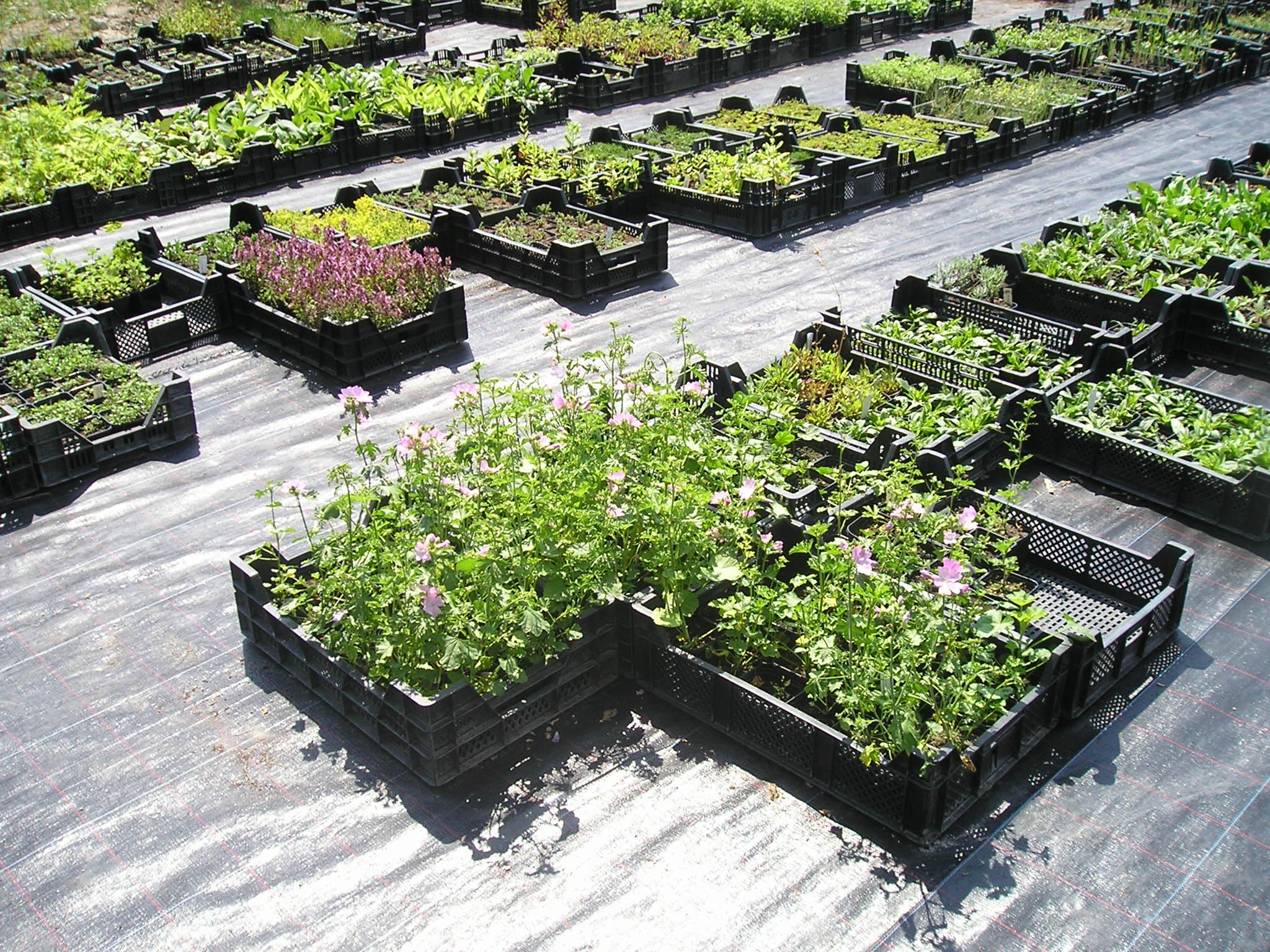 Bio-Pflanzen