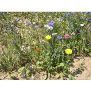 Rommelsbacher Blumenmischung